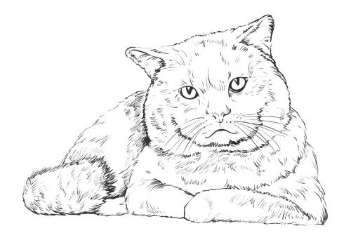 Картинка для выжигания Кот