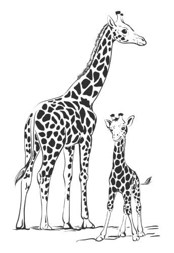 Картинка для выжигания по дереву Животные, жирафы
